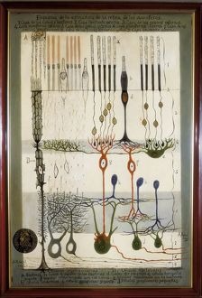 <b>Santiago Ramon Y Cajal</b><br>Selection of 10 items