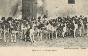 The Hounds of the Duchess of Uzes