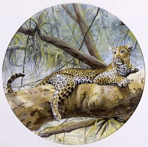 A leopard resting on a rainforest branch