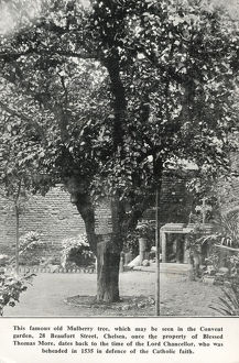 new images grenville collins collection/old mulberry tree convent garden beaufort street