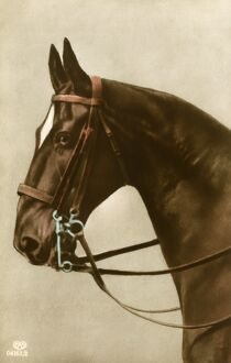 Portrait of a horse wearing a double bridle