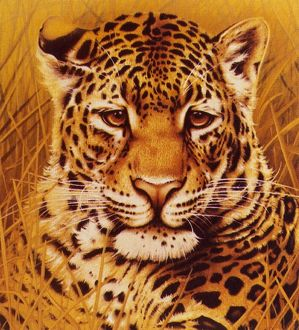 A portrait of a Leopard