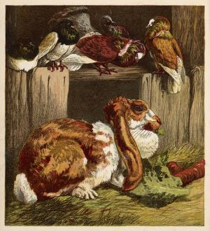 RABBIT AND PIGEONS 1860S