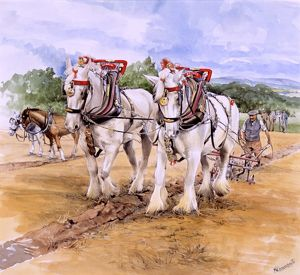 Shire horse team during Ploughing Match