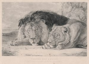 SLEEPING LIONS/F. LEWIS