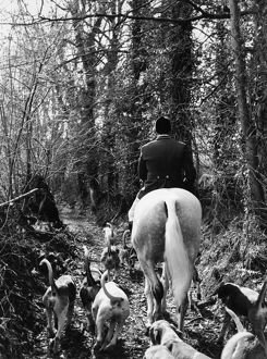 South Devon Foxhounds follow a trail
