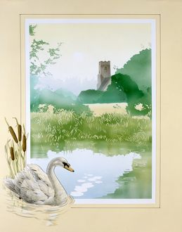 Swan and a village pond
