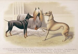 TERRIERS AND GREYHOUND