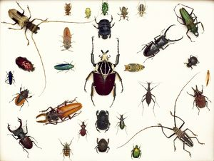 Various beetle specimens