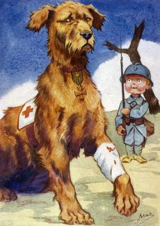WOUNDED RED CROSS DOG