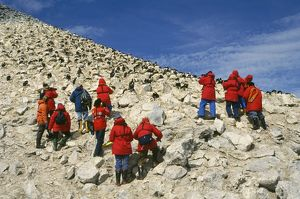 Antarctica - tourists at Blue-eyed Cormorant colony,