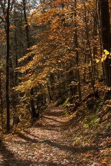 The Appalachian Trail (AT) in autumn