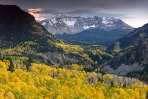 Aspen forests in autumn