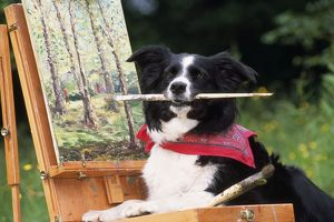 Border COLLIE DOG - at painting easel