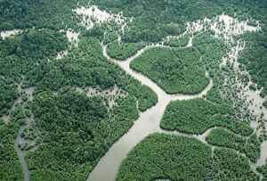 BORNEO - Aerial of Mangrove Forest