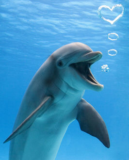 Bottlenose dolphin, underwater, blowing heart shaped bubbles