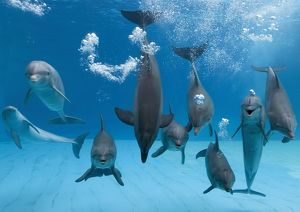 Bottlenose dolphins - dancing and blowing air underwater