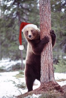 Brown Bear - hugging tree, wearing Christmas hat