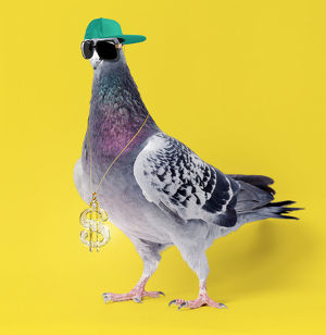 Carrier Pigeon, wearing sunglasses hat and gold