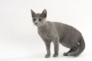 <b>Russian Blue</b><br>Selection of 147 items
