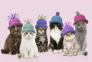 Cats - group wearing woolly hat