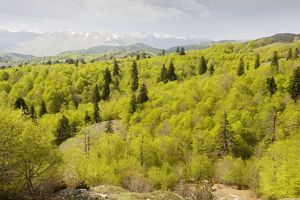 The central Pindos Mountains in spring, looking north from the Katara Pass over forests of Beech
