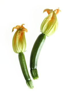 Courgette - with flowers