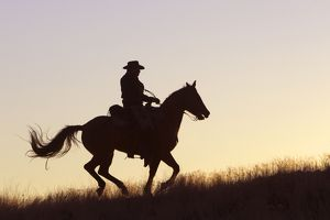 Cowboy - silhouette of cowboy riding Quarter Horse at sunset
