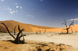 Dead Trees In Dead Vlei - Dead trees with red dunes and a dried white clay floor