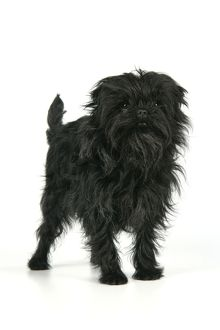 <b>Affenpinscher</b><br>Selection of 32 items
