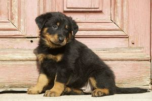<b>Beauceron</b><br>Selection of 57 items