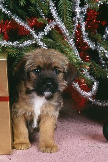 dog border terrier christmas tree