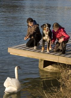 Dog - Children feeding swan by waters edge with