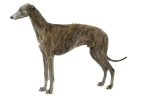 Dog - Greyhound