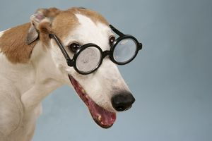 Dog - Greyhound wearing joke magnifying glasses
