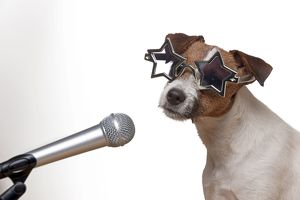 DOG - Parson jack russell terrier singing into microphone wearing star glasses
