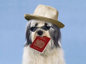Dog - with passport & sun hat