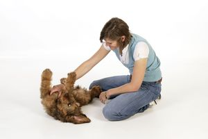 Dog - Puppy (Briard) having its chest stroked