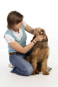 Dog - Puppy (Briard) having its mouth opened and