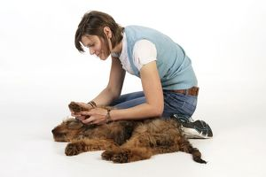 Dog - Puppy (Briard) having its paws examined