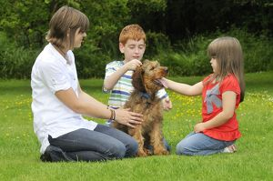 Dog - Puppy (Briard) interacting with family
