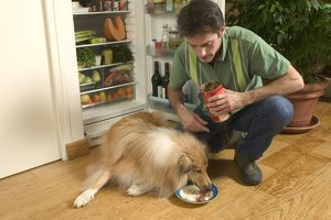Dog - Rough Collie being fed web food by owner