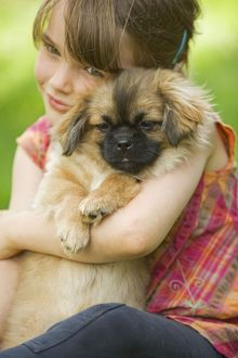 Dog - Tibetan Terrier - puppy being cuddled by young girl