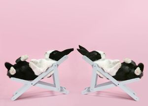 Two Dutch rabbits relaxing in deckchairs