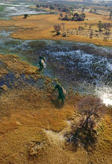 Elephants - aerial view, crossing flooded plain