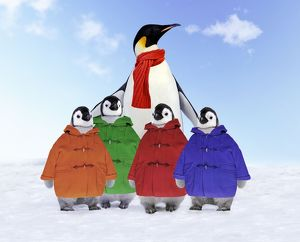 Emperor Penguin - Adult wrapped in scarf & young wearing duffle coats
