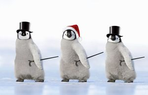 Emperor Penguin - three chicks wearing a top hat a Christmas hat and carrying canes