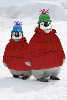 Emperor Penguin - two chicks wearing woolly hats & duffle coats