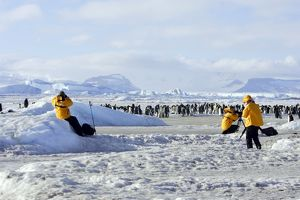 Emperor Penguin - colony being photographed