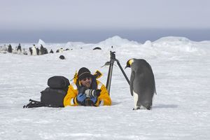 Emperor Penguin - with photographer